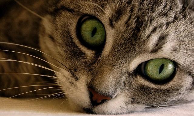 Ψηφίστηκε το νομοσχέδιο για τη φροντίδα ζώων