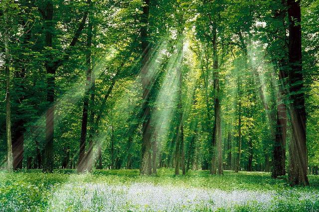 Μέτρα για τα δάση από το ΥΠΕΚΑ
