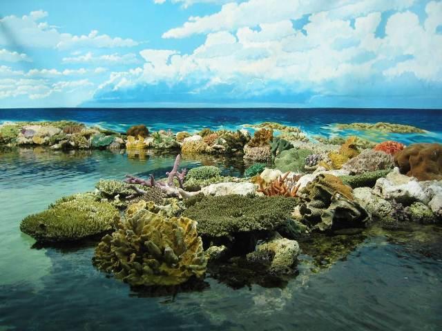 Λίγες οι ελπίδες για τους κοραλλιογενείς υφάλους