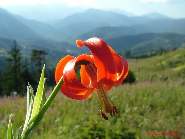 Ο ΟΗΕ μιλά για τη βιοποικιλότητα
