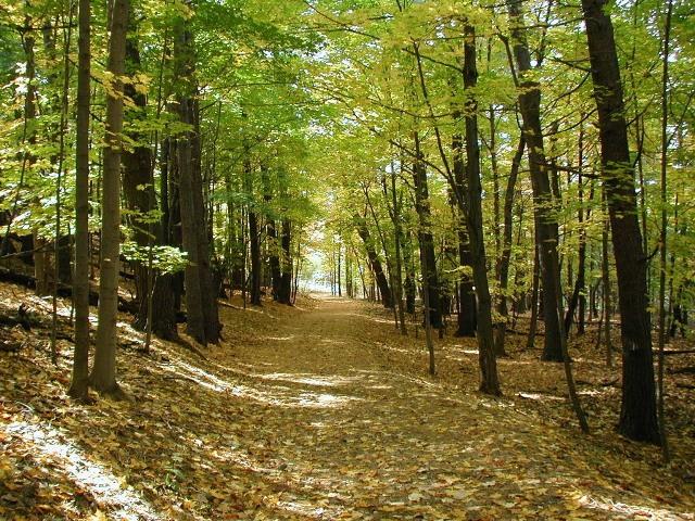 Σύστημα Απογραφής και Παρακολούθησης Δασών και Δασικών Εκτάσεων – (ΣΑΠ)