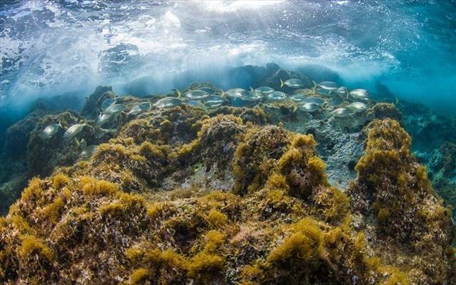 Εκδήλωση για τη θαλάσσια βιοποικιλότητα
