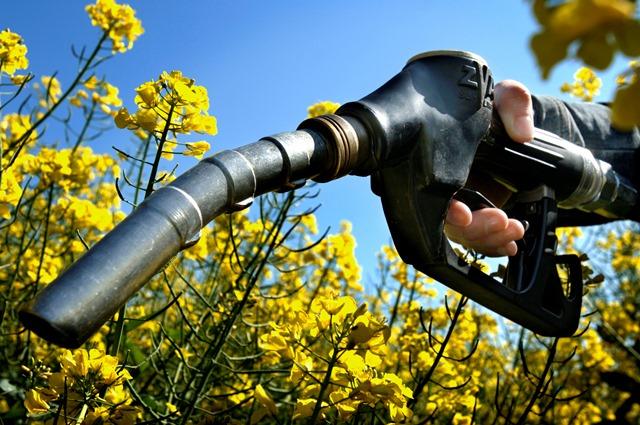 Παραγωγή βιοκαυσίμου αρνητικού άνθρακα
