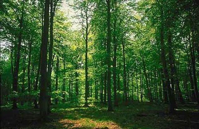 Ημερίδα για προστασία δασών από πυρκαγιές