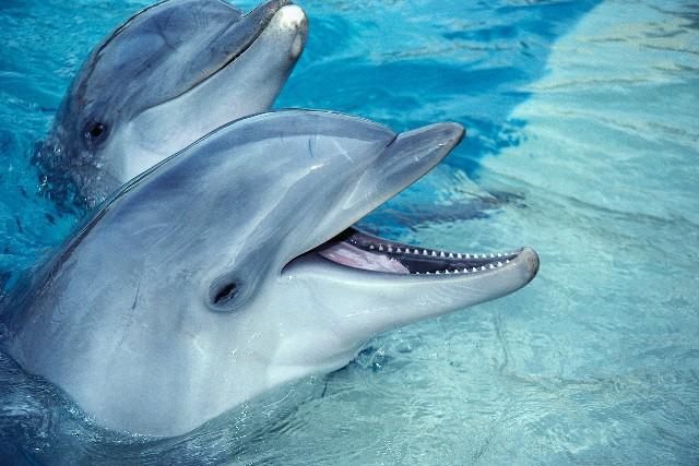Νεκρά δελφίνια στη Βουλγαρία