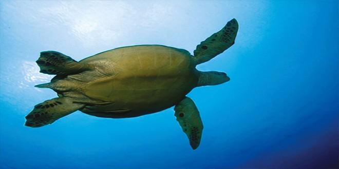 Ναυτικές ασκήσεις θέτουν σε κίνδυνο θαλάσσια είδη