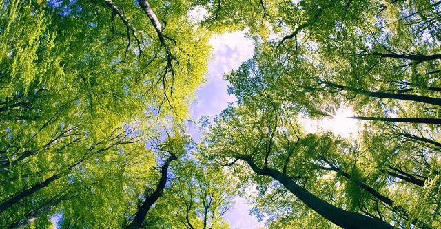 Συνάντηση για τα δάση από το Ίδρυμα Νιάρχος