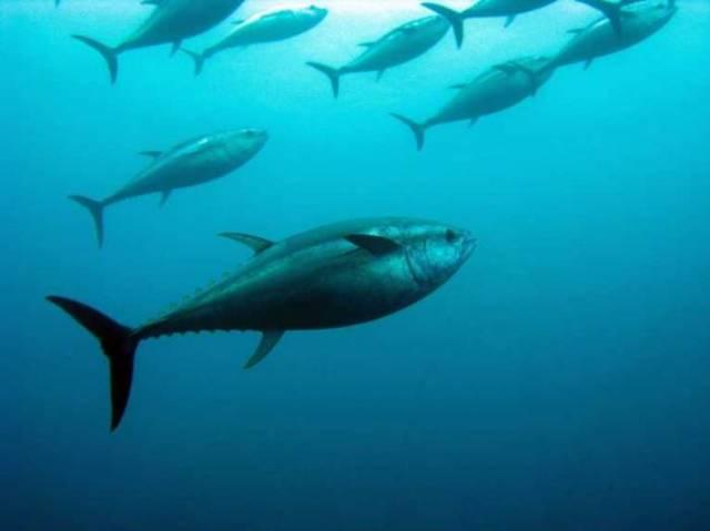 Συρρίκνωση των ψαριών από την κλιματική αλλαγή