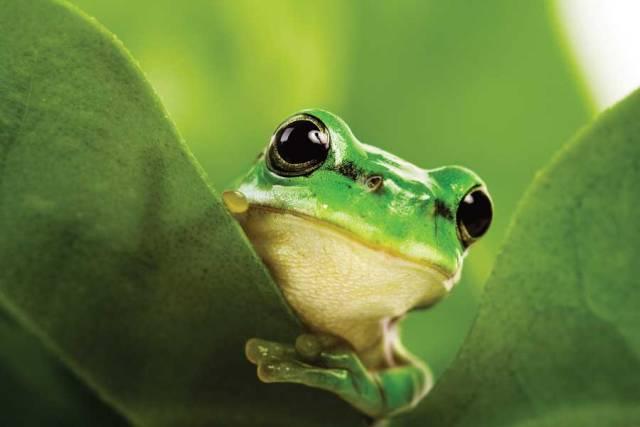 Δημόσια Διαβούλευση για τη Βιοποικιλότητα