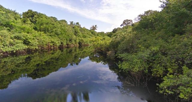 Δυσοίωνο το μέλλον του Δάσους Αμαζονίου