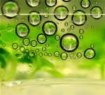 biofuel02