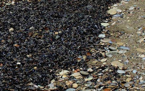 dead fish samos