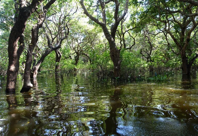 Ψηφίζεται το νομοσχέδιο για τους δασικούς χάρτες
