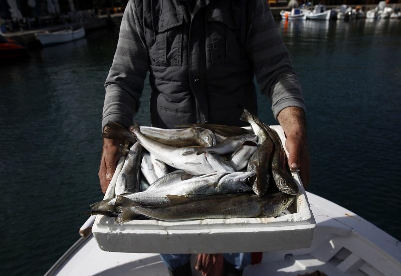 Greenpeace: Online παραγγελία ψαριών από αλιείς χαμηλής έντασης