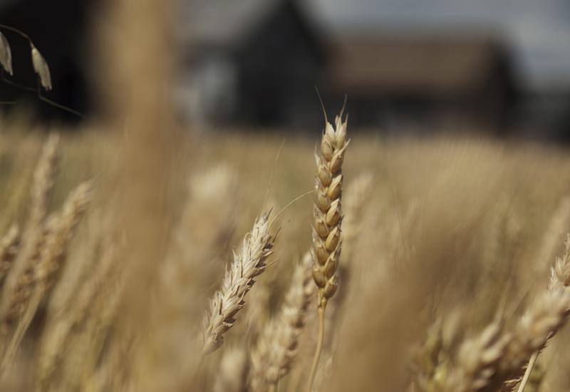 Η κλιματική αλλαγή «δηλητηριάζει» τα τρόφιμα