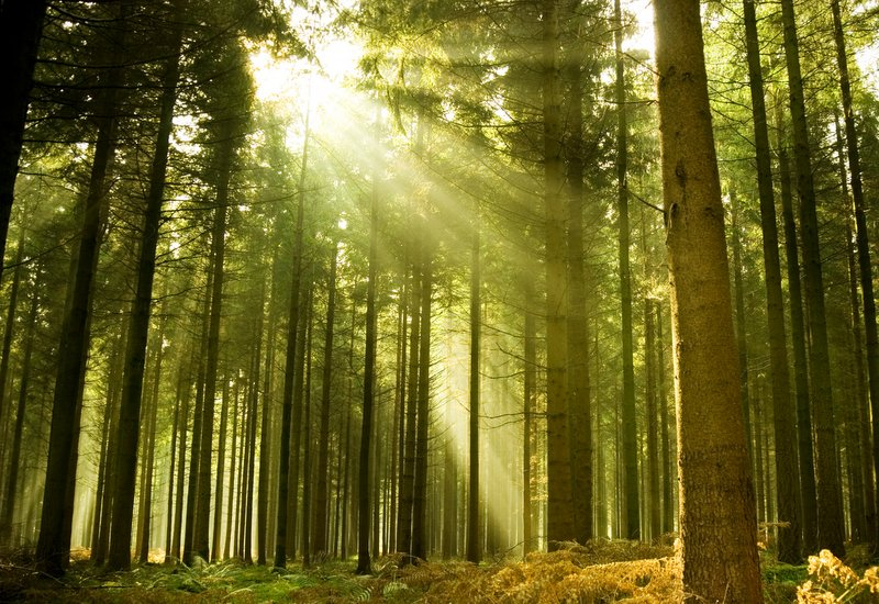 9.600 είδη δέντρων απειλούνται με εξαφάνιση