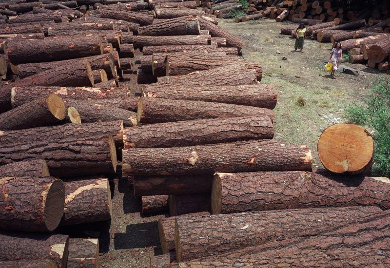 «Πράσινη» μέθοδος για τη μετατροπή ξύλου σε καύσιμα και χημικά