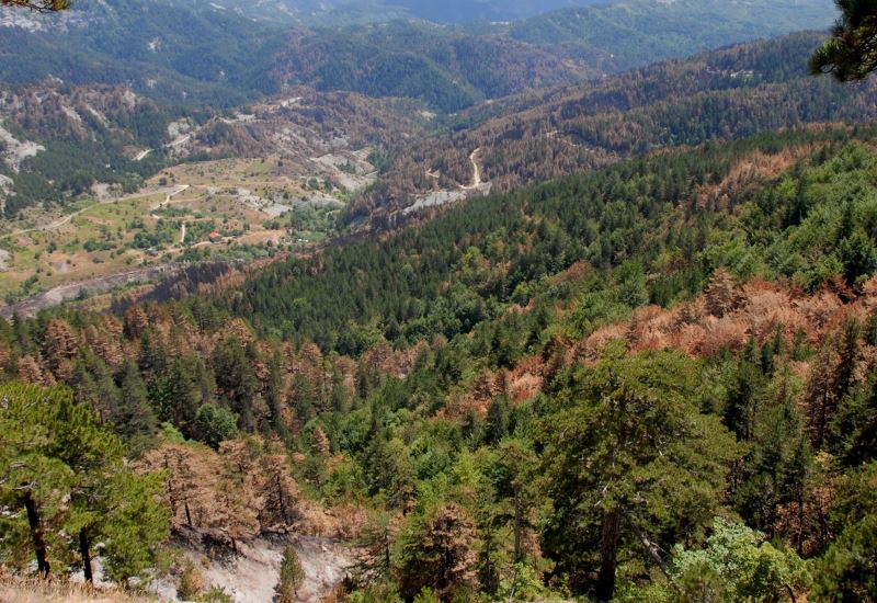Τροποποιούνται διατάξεις της δασικής νομοθεσίας