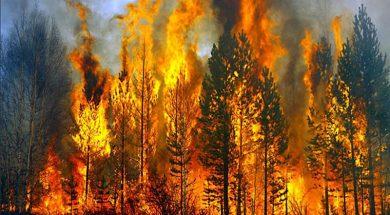 πυρκαγιες