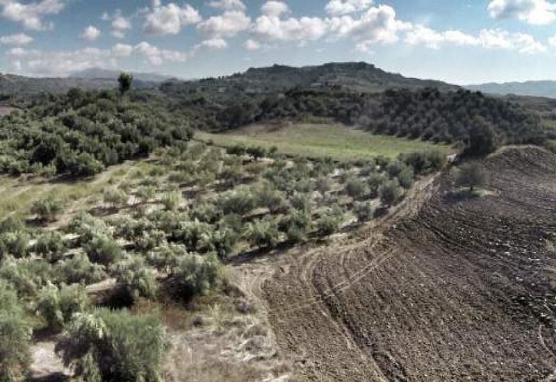 Παράταση για την εξαγορά δασικών εκτάσεων που εκχερσώθηκαν πριν το 1975