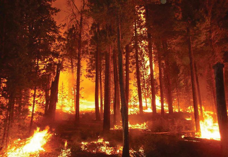 Εκδόθηκε η εγκύκλιος για τις ενέργειες των Δασικών Υπηρεσιών μετά από δασικές πυρκαγιές