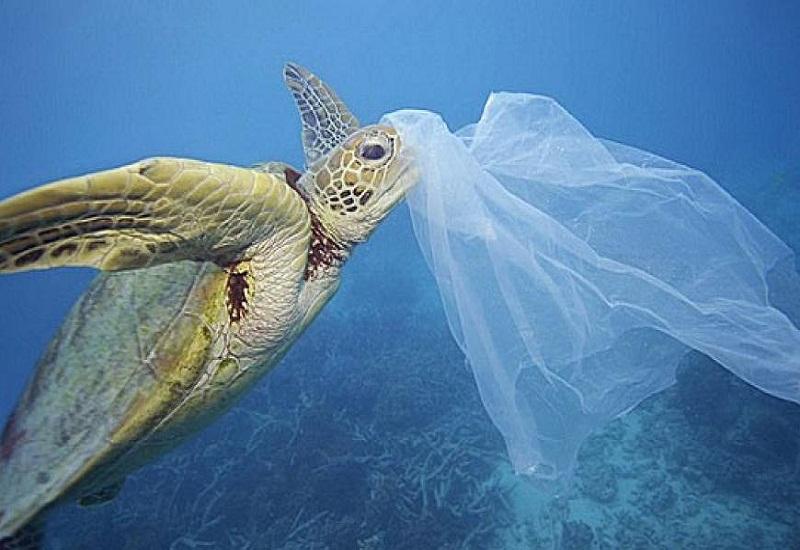 Καθηγητής Γ. Παπαθεοδώρου: «Η πλαστική σακούλα το πιο θανατηφόρο απόρριμμα για τη θαλάσσια ζωή»