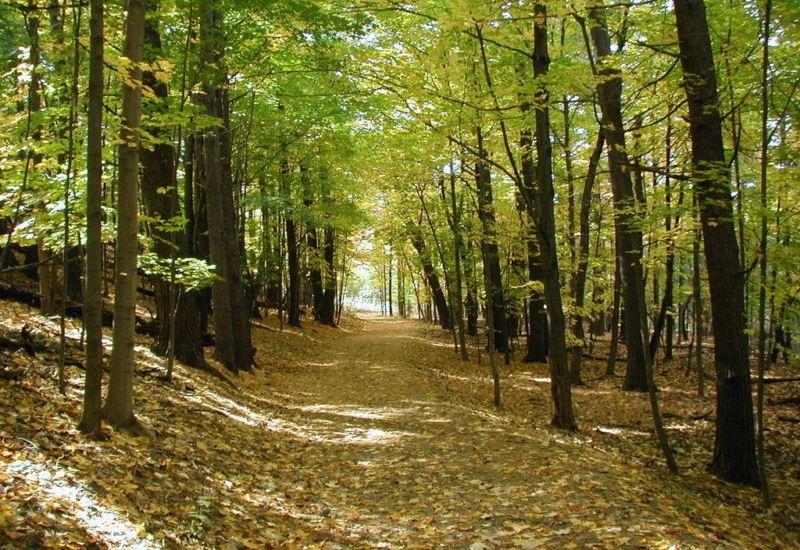 """Σ. Φάμελλος: """"Σχεδιάζουμε την παραγωγική μηχανή των ελληνικών δασών"""""""