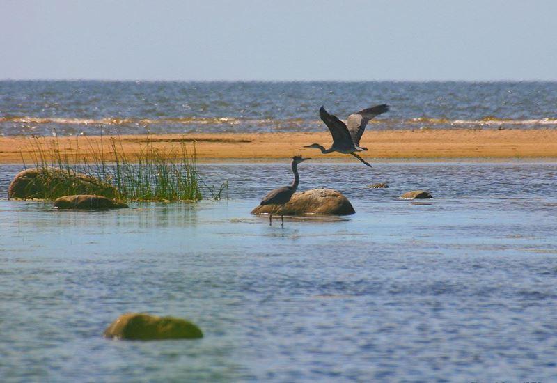 ΥΠΕΝ: Δύο Διεθνείς Διαγωνισμοί για τις Περιοχές Natura 2000