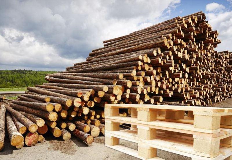 ΥΠΕΝ: «Περισσότερη και φθηνότερη ξυλεία φέτος στους κατοίκους των ορεινών περιοχών»