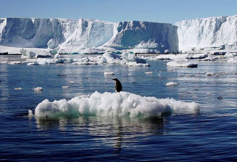 Greenpeace: Συμπληρώματα Διατροφής απειλούν την Ανταρκτική!