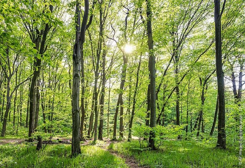 ΥΠΕΝ: Εκσυγχρονίζονται 70 χρόνια μετά οι δασικές διαχειριστικές μελέτες