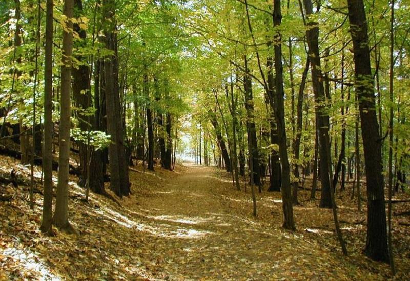Η αποκατάσταση των δασών της Γης είναι η πιο αποτελεσματική λύση