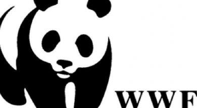 wwf-hellas-eco2nomy_0