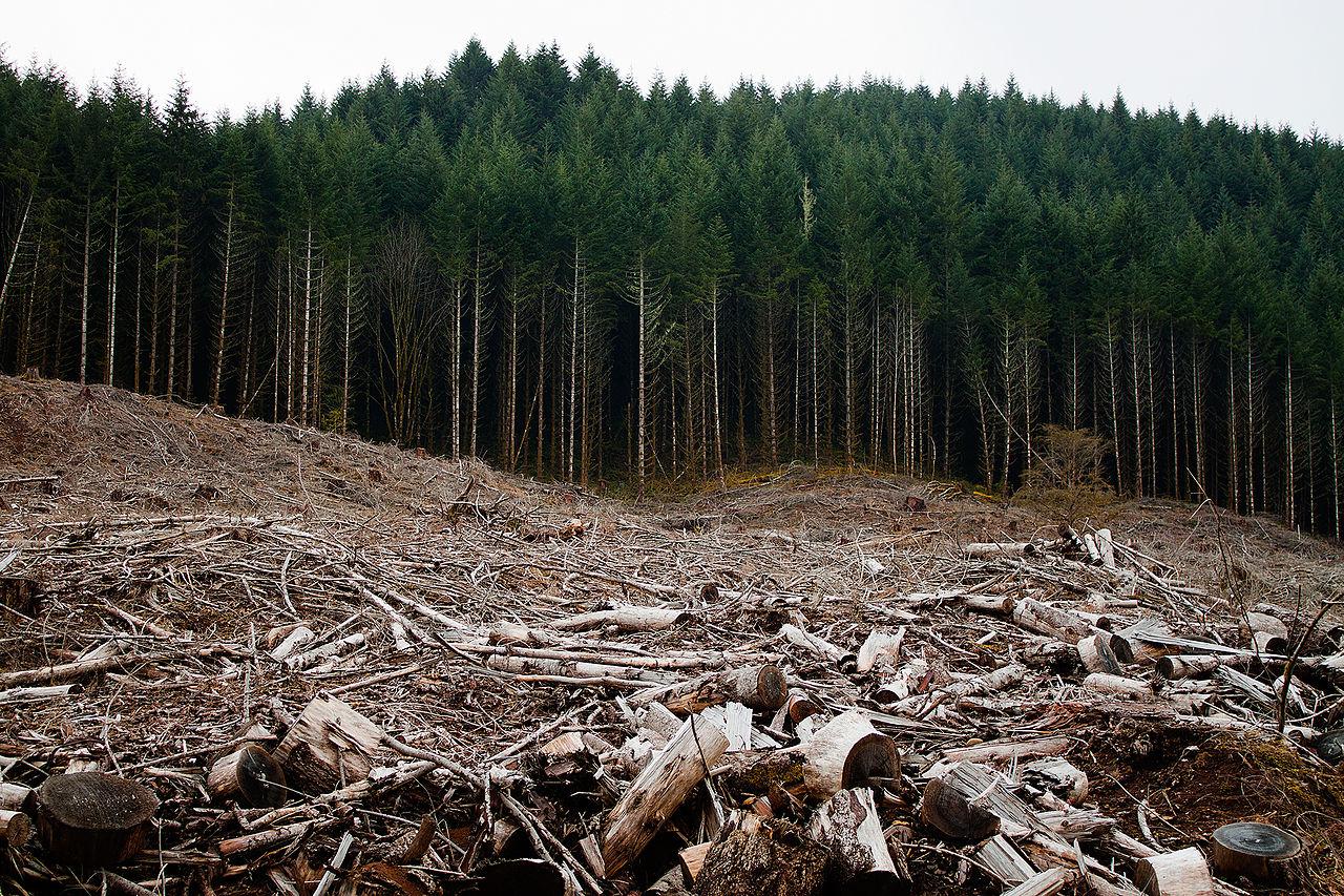 Σε ποιες περιοχές δίνεται παράταση στους δασικούς χάρτες