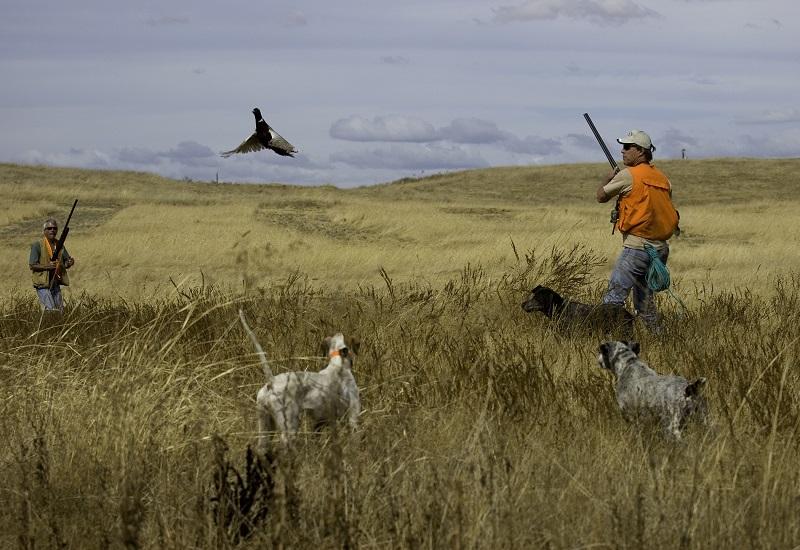 Εκδόθηκε η ΚΥΑ για εκγύμναση και αγώνες κυνηγετικών σκύλων στις Ελεγχόμενες Κυνηγετικές Περιοχές
