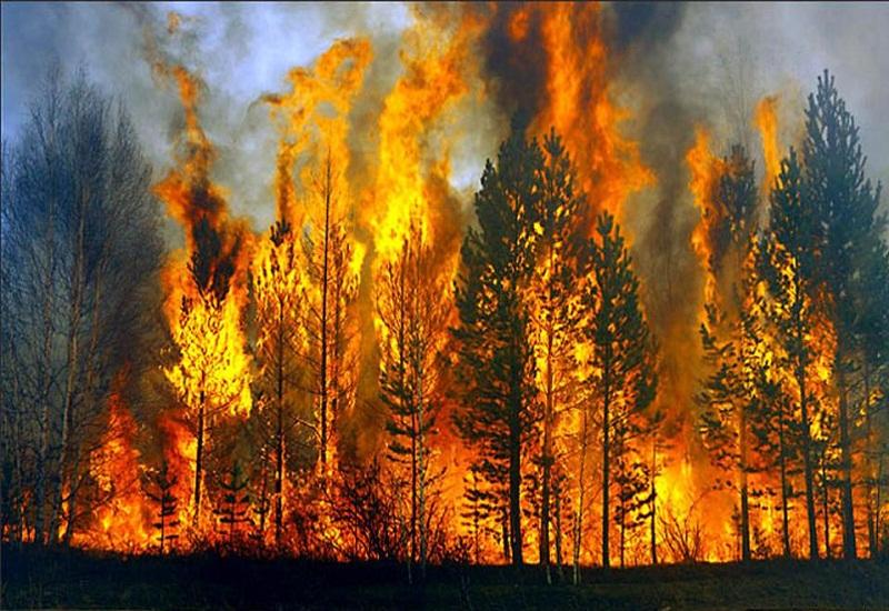 ΓΓΠΠ: Τι πρέπει να κάνουμε σε κατάσταση κινδύνου από φωτιά σε δάσος (vid)