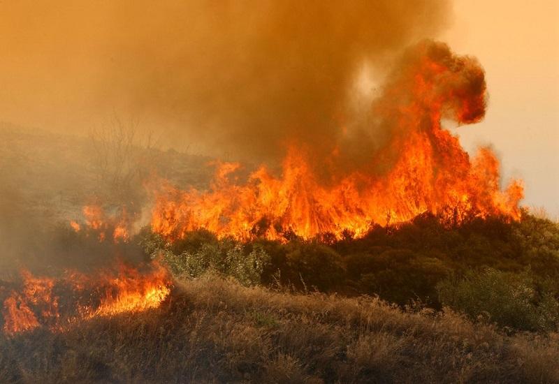 """Σ. Φάμελλος: """"Χρειαζόμαστε ισχυρή δημόσια πολιτική πρόληψης των δασικών πυρκαγιών"""""""