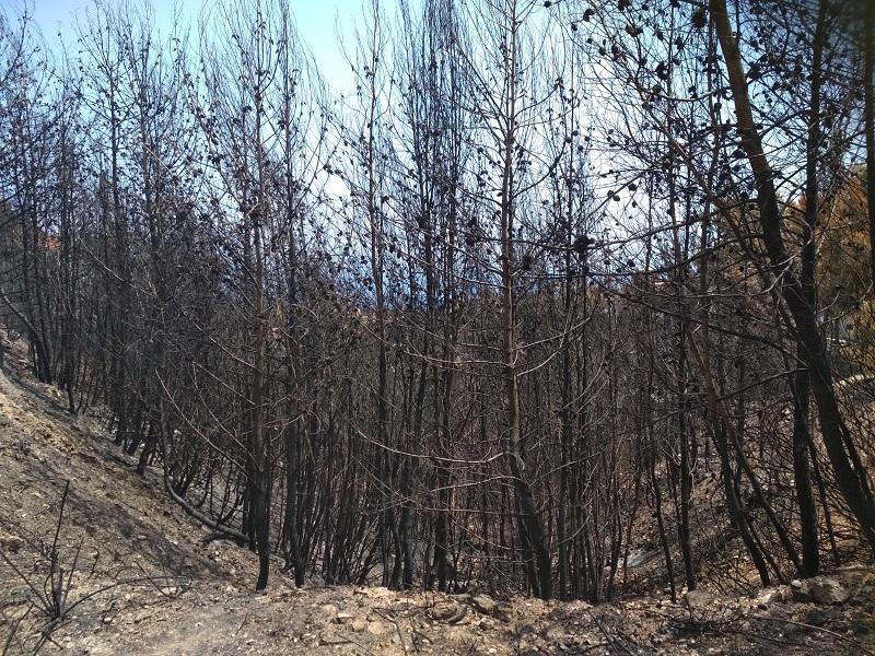 WWF Ελλάς: Απροετοίμαστοι για δασικές πυρκαγιές