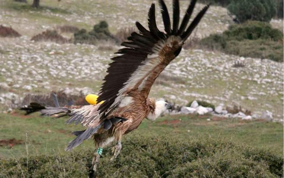 Αναστολή λειτουργίας του Ελληνικού Κέντρου Περίθαλψης Άγριων Ζώων (ΕΚΠΑΖ)