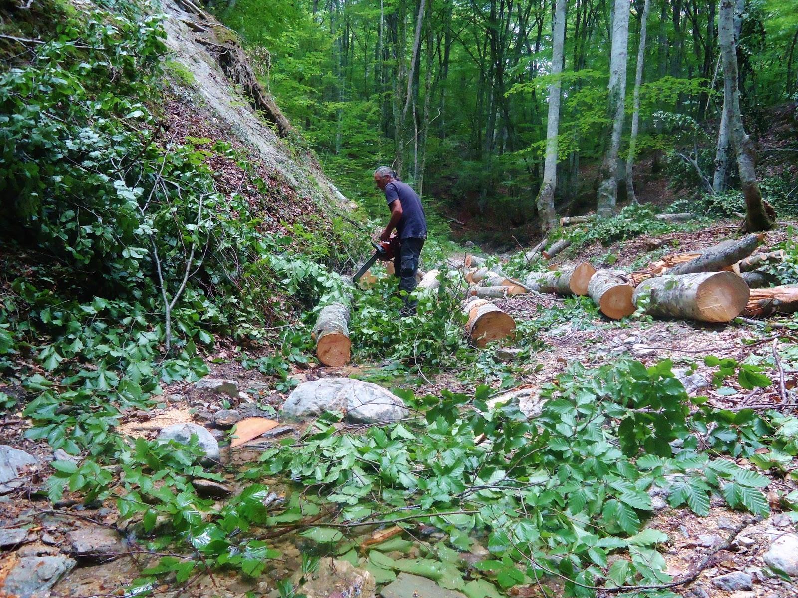 Σχέδιο δράσης για πρόληψη των δασικών πυρκαγιών παρουσίασε ο Σ. Φάμελλος