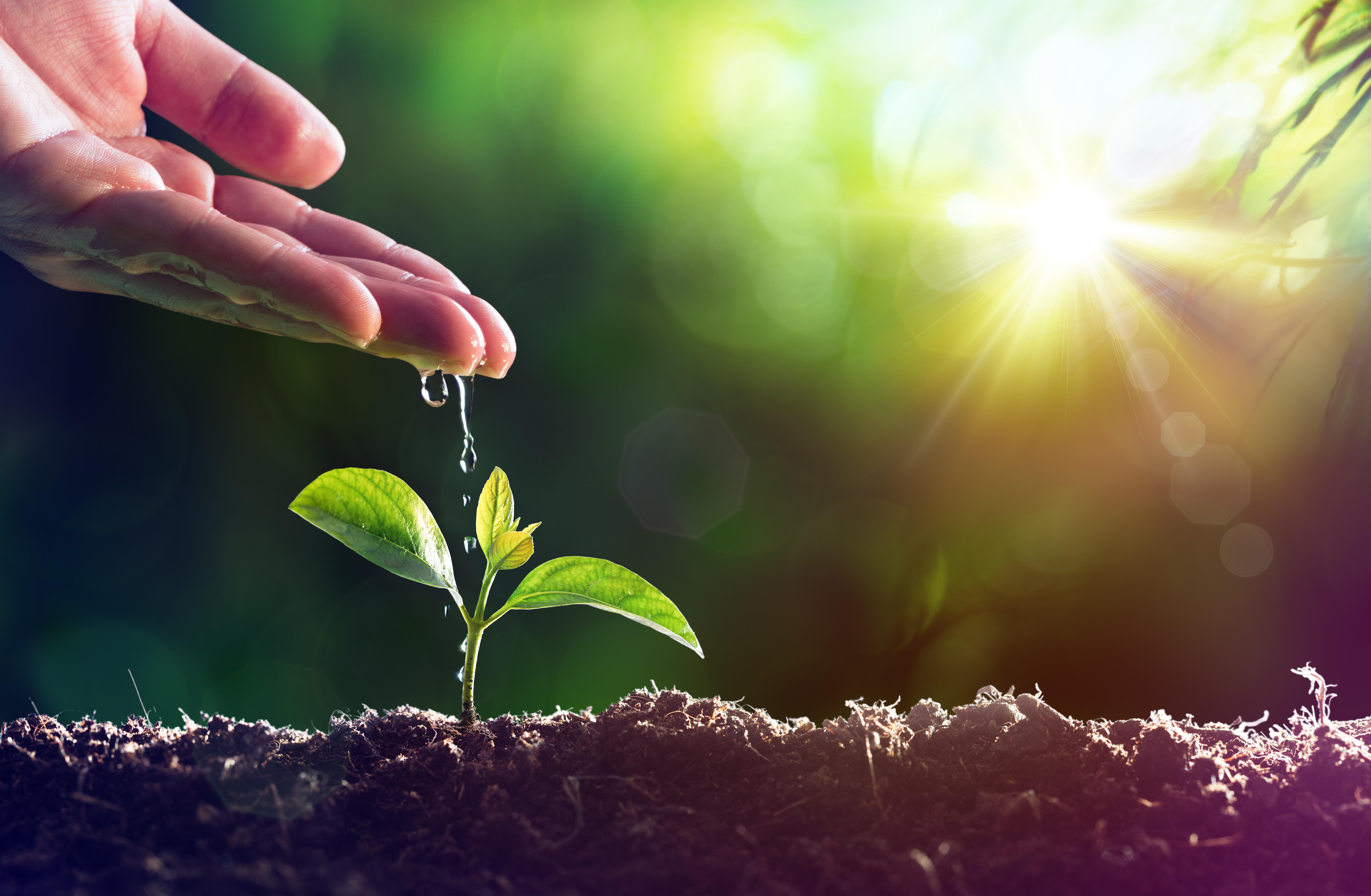 Στις κορυφαίες εταιρείες στην προστασία του κλίματος η Bayer