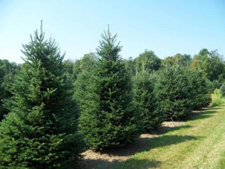 Ανακυκλώνονται τα φυσικά χριστουγεννιάτικα δέντρα στον Δήμο Πυλαίας-Χορτιάτη