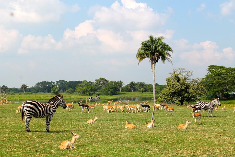 ΟΗΕ: 1 στα 8 είδη στον πλανήτη απειλούνται με εξαφάνιση