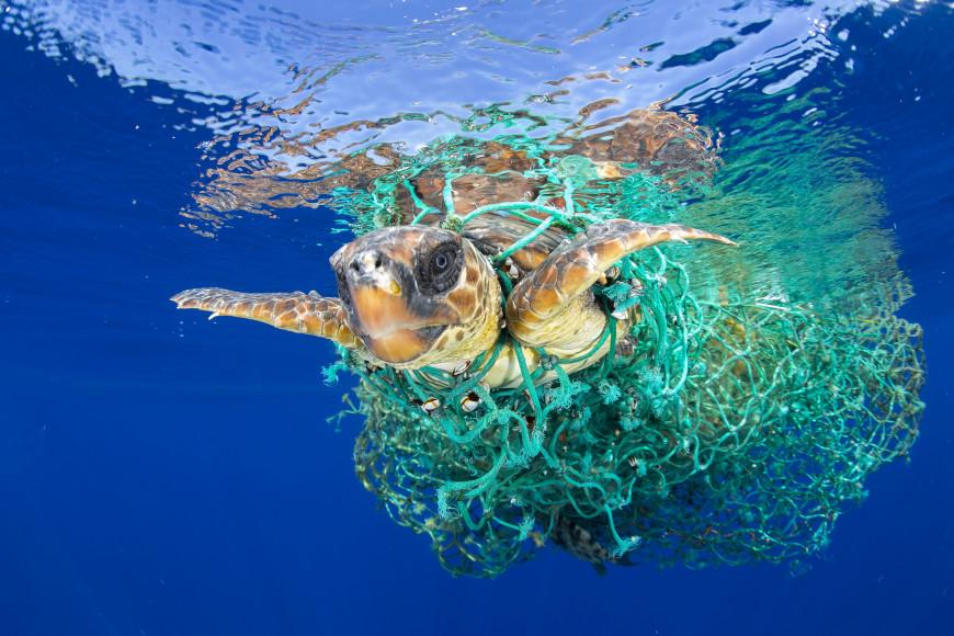 WWF: Απροστάτευτη παραμένει η Μεσόγειος