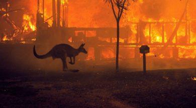 twip-01-kangaroo-fires-ps-200102_hpMain_1_16x9_992