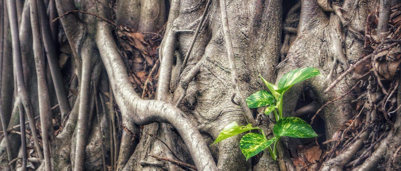 The Green Tank: Η απάντηση στην πανδημία καθοριστική για τη μετάβαση σε μια κλιματικά ουδέτερη οικονομία