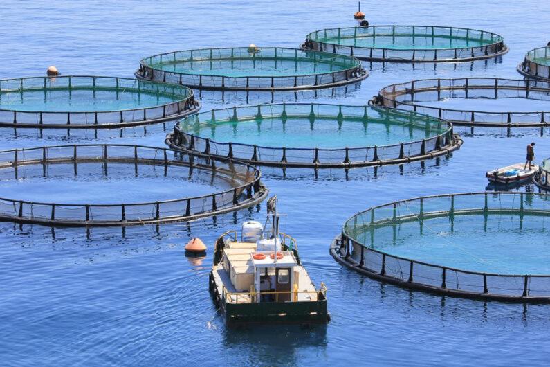 Με ταχύτητα οι χωροταξικές ρυθμίσεις για τις νέες επενδύσεις στην υδατοκαλλιέργεια
