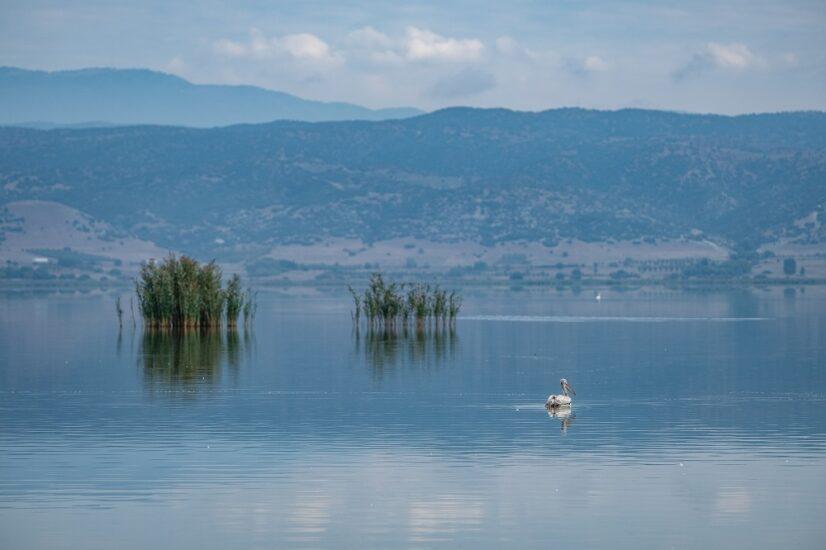 Προχωρά ο συντονισμός για την αποκατάσταση της λίμνης Κορώνειας