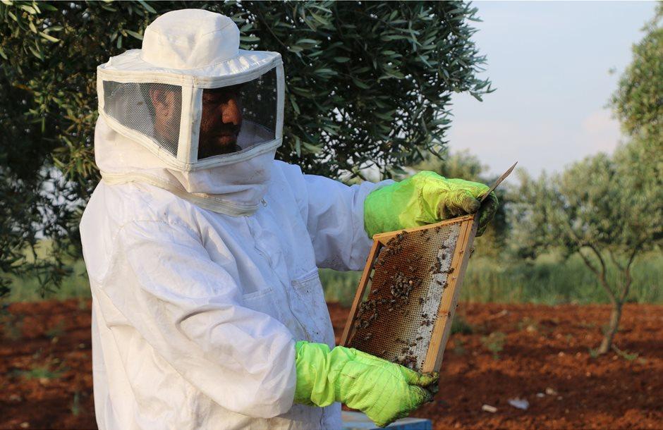 Οι Eλληνες μελισσοκόμοι κρούουν τον κώδωνα κινδύνου λόγω κορωνοϊού