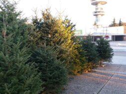 χριστουγεννιάτικα-δέντραjpg